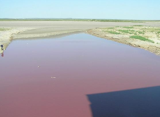 Texas Red Lake