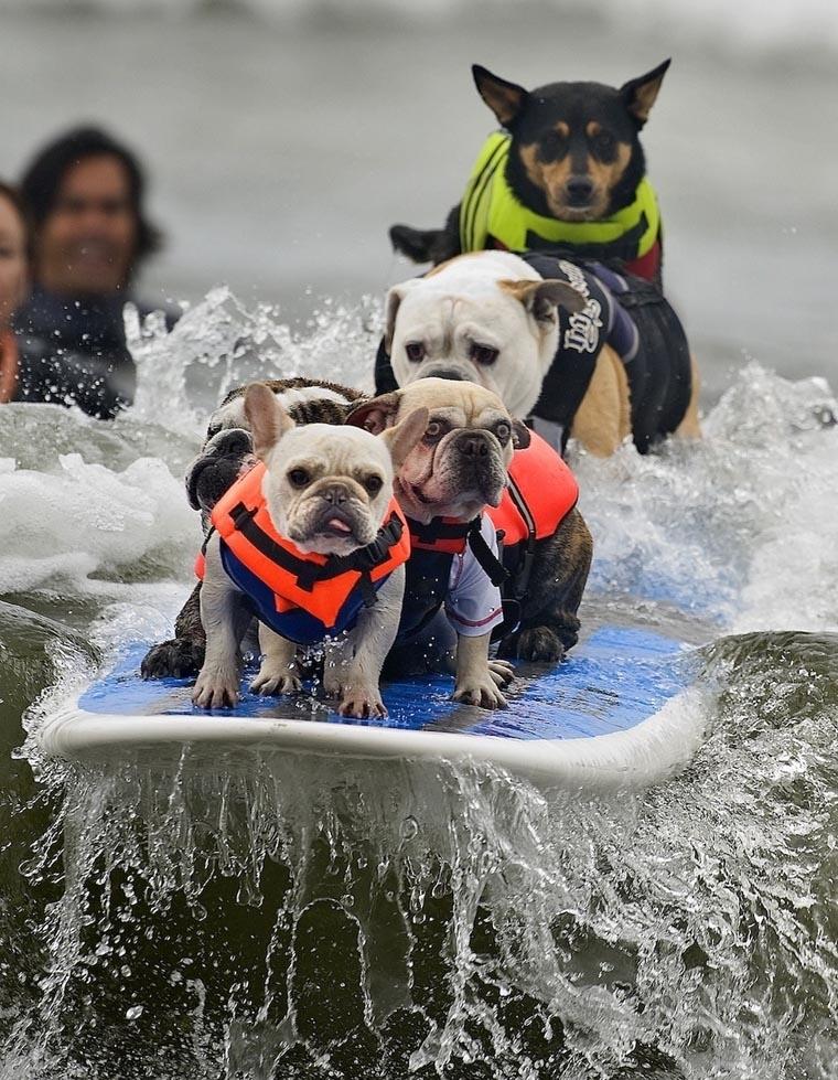 Best Animal Photos of 2011