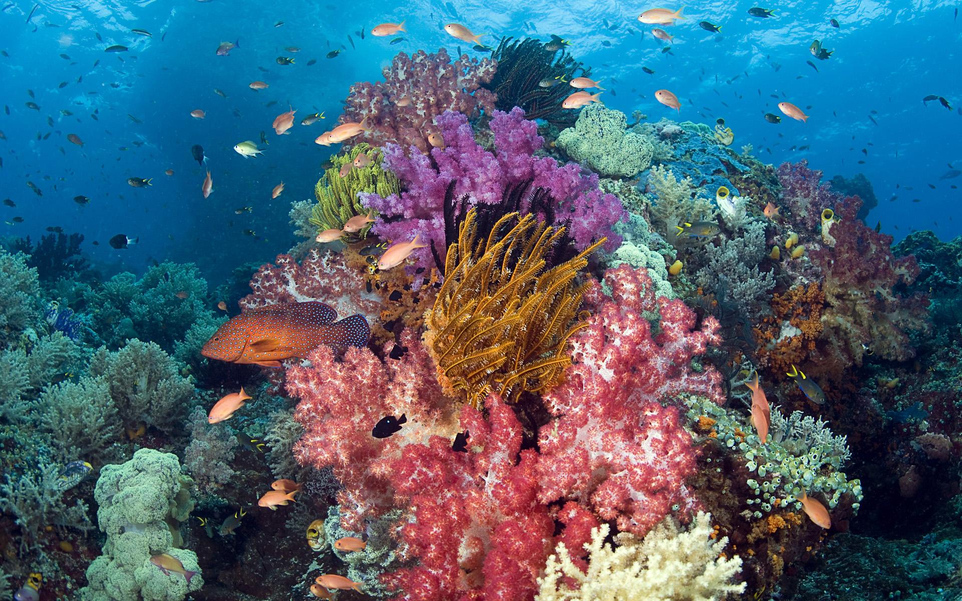Coral reef Raja Ampat-HD